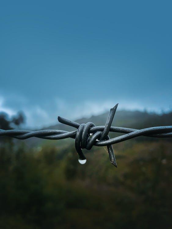 Fotografi Fokus Dangkal Kawat Berduri