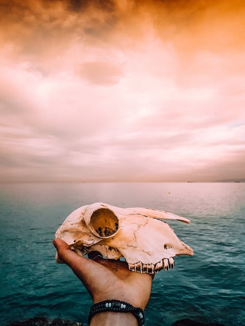 Person Holding Sea Creature Under White Sky