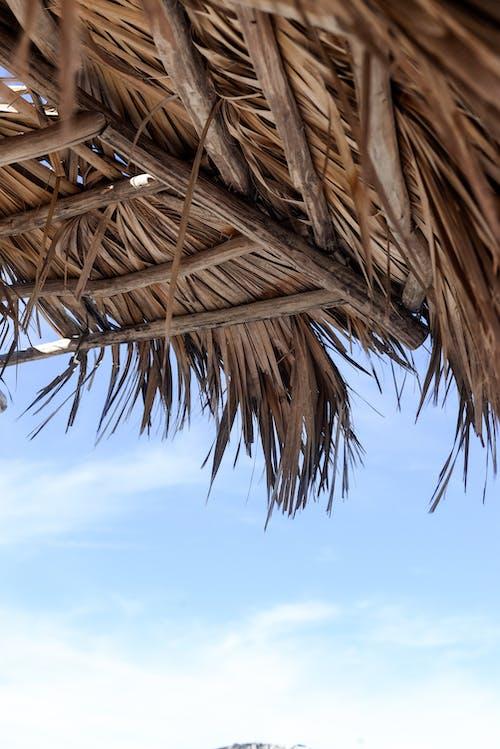 Immagine gratuita di bel cielo, cuba, foglie di palma, oceano