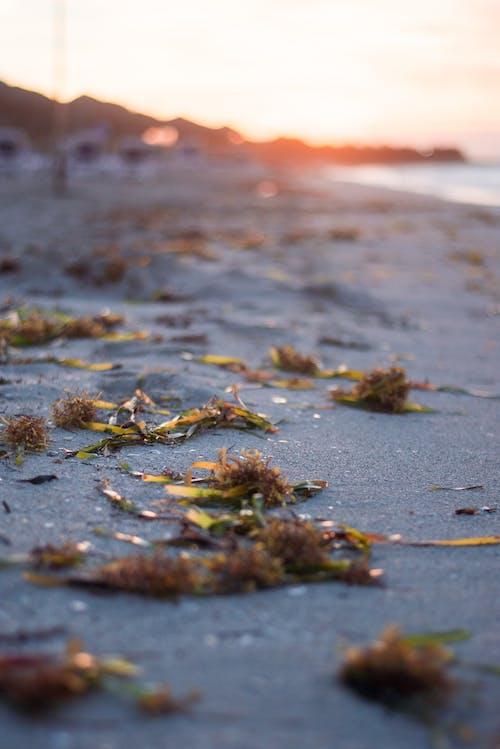 Gratis lagerfoto af smuk solnedgang, strand, strand goers, strand liv