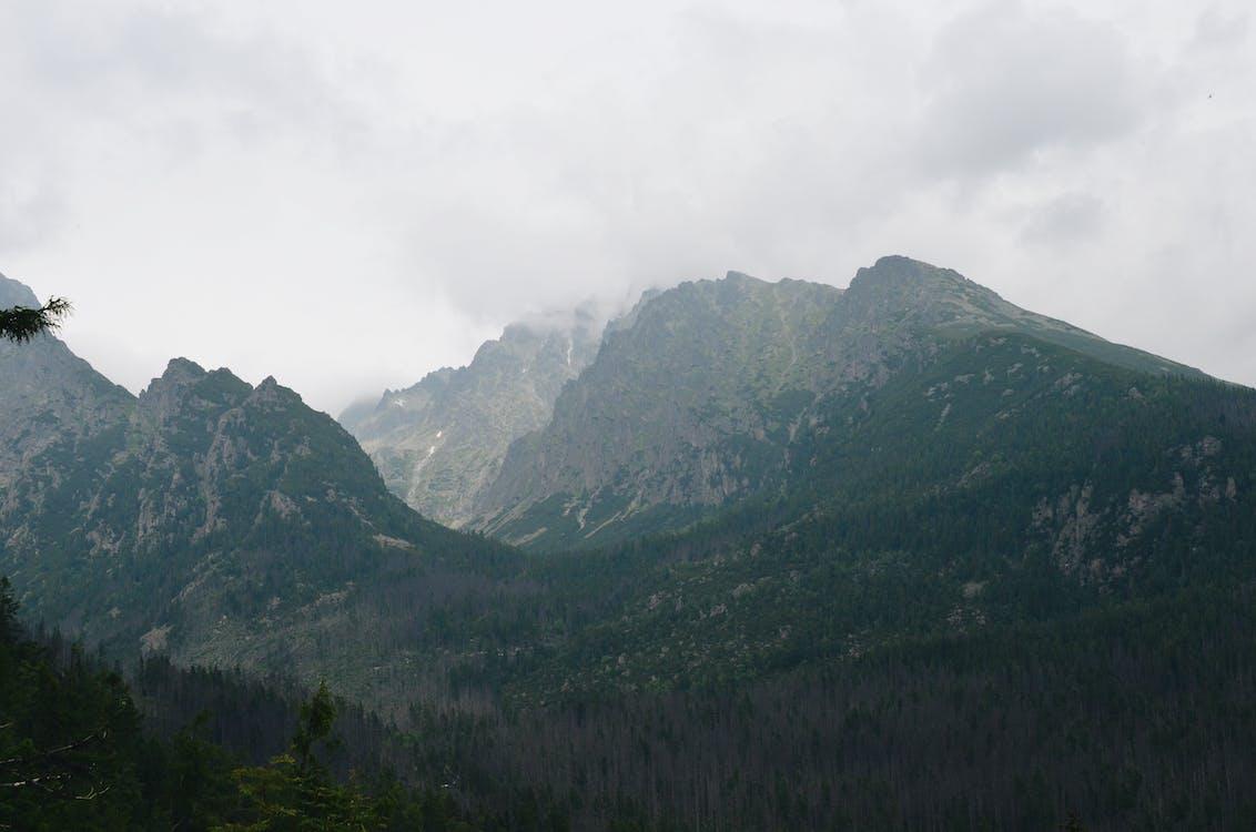 floresta, mata, montanha