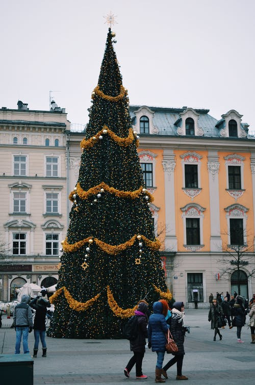 Free stock photo of city, new year, oldtown, tree