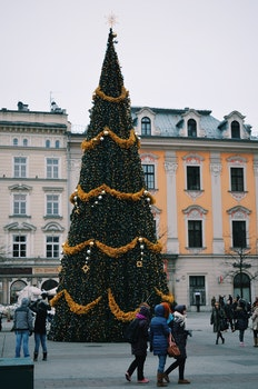 Free stock photo of city, tree, old, new year
