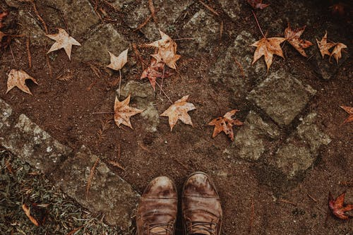 Person Wearing Brown Leather Shoes on Ground With Fallen Leaves