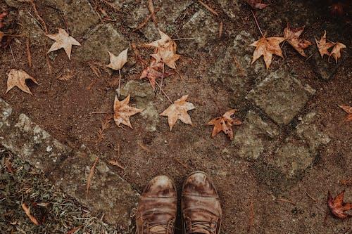 Безкоштовне стокове фото на тему «висушене листя, візерунок, грубий, ґрунт»