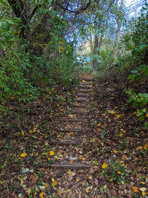 camping, stairs, steps