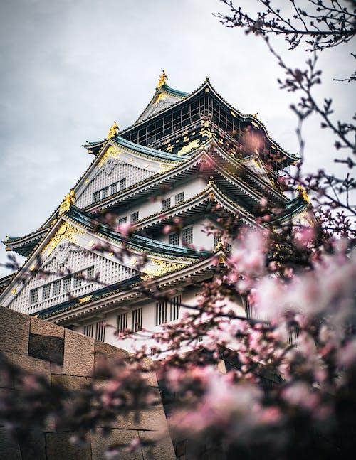 Foto profissional grátis de ancião, arquitetura, castelo, cobertura