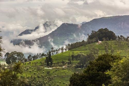 Imagine de stoc gratuită din activități agricole, agricultură, arbori