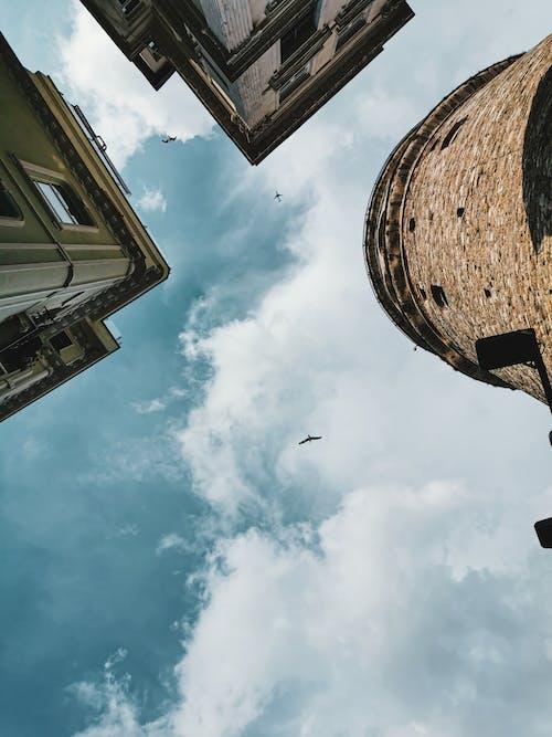 Free stock photo of birds, blue sky, flying