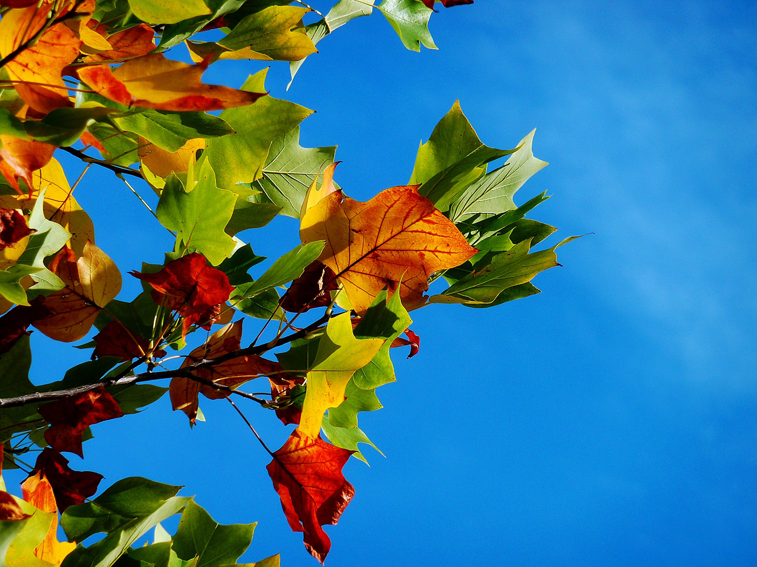 Red Orange and Green Leaves during Daytime