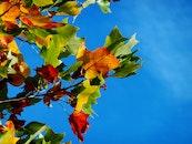 park, leaf, leaves