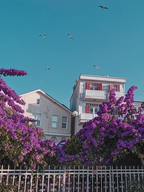 Free stock photo of birds, blue sky, flowers