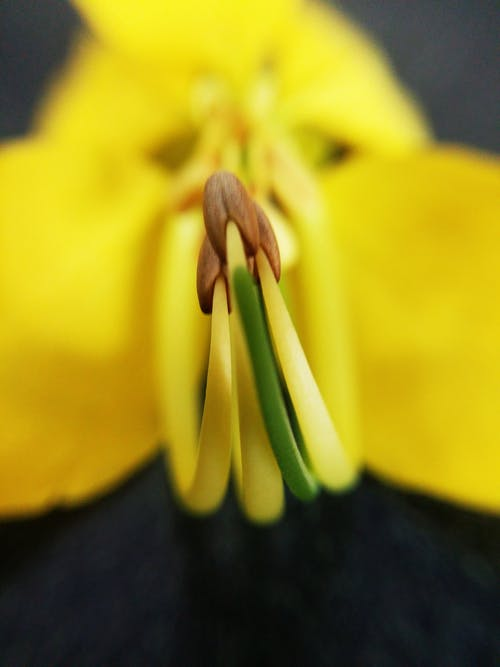 Foto stok gratis bunga kuning, bunga tunggal, bunga-bunga, bunga-bunga indah