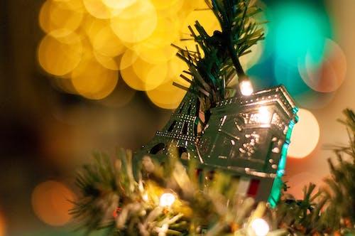 Imagine de stoc gratuită din arbore, bokeh, Crăciun, lumini