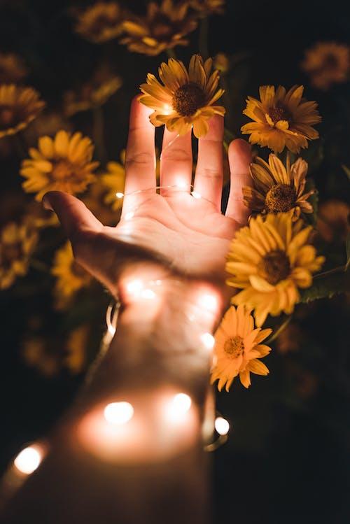 Person, Die Gelbe Blütenblattblume Hält