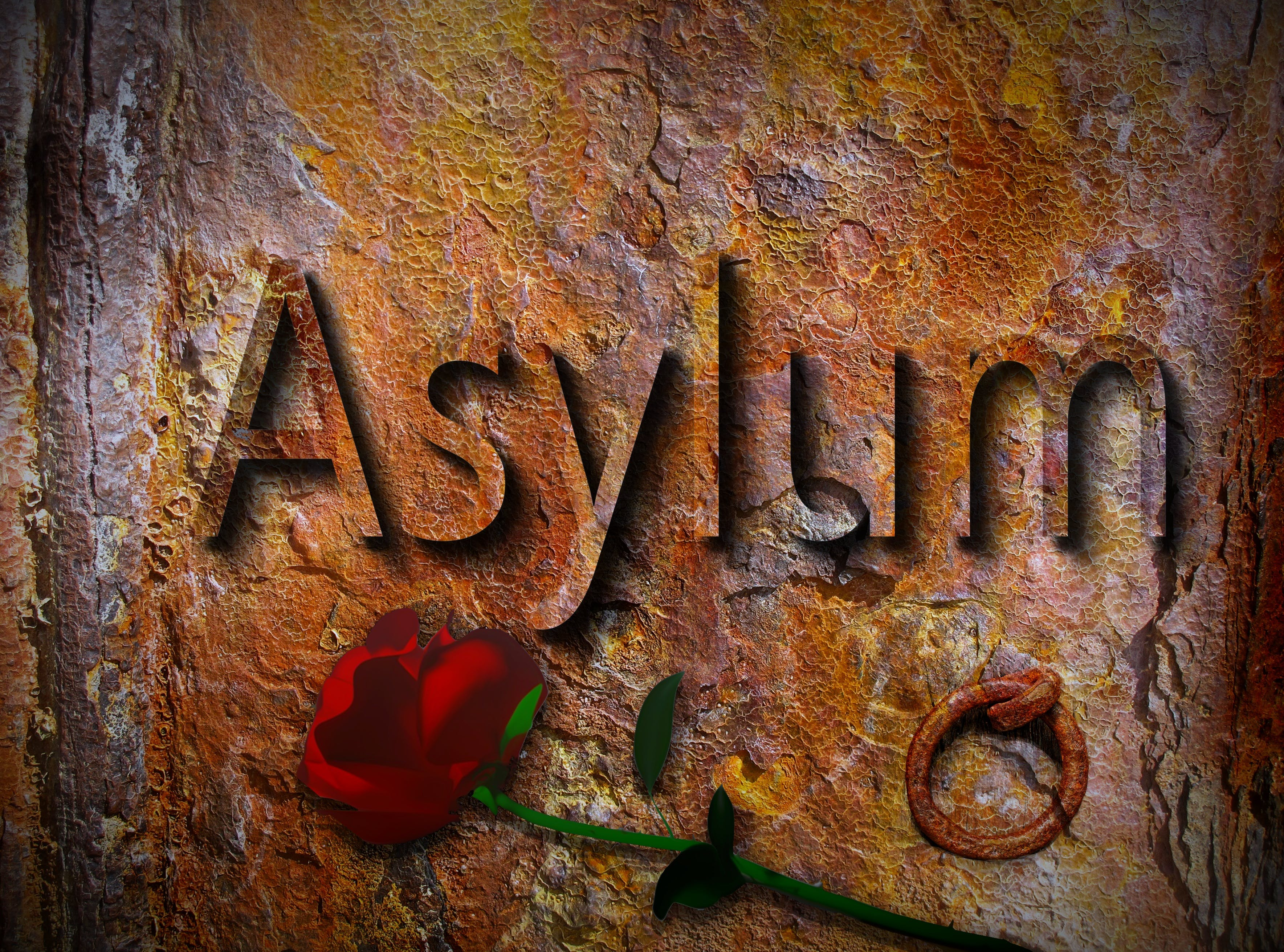 Free stock photo of asylum, asylum applicants, asylum seeking, charity