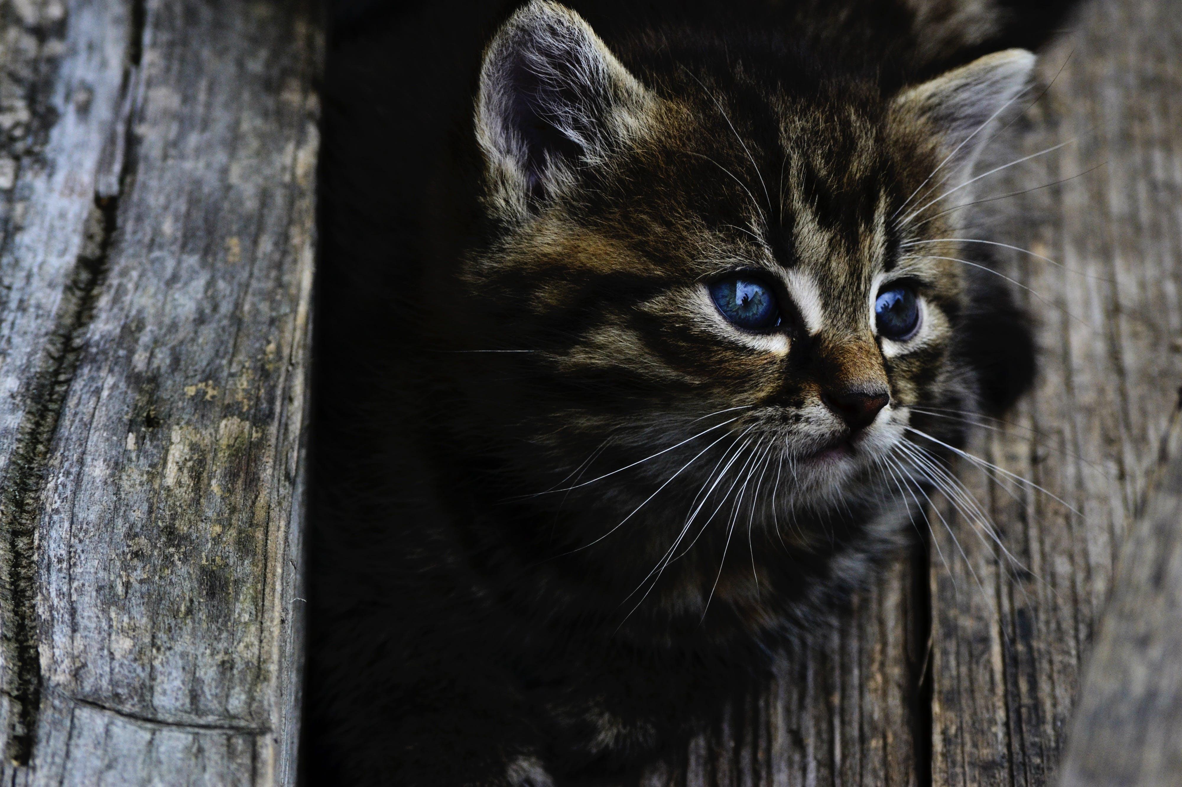 Kostnadsfri bild av djur, djurfotografi, husdjur, katt