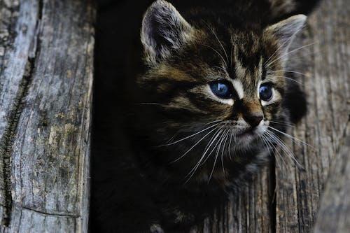 Δωρεάν στοκ φωτογραφιών με Γάτα, γατάκι, γατούλα, ζώο