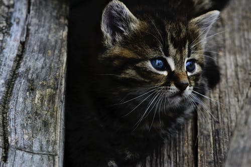 Fotobanka sbezplatnými fotkami na tému domáce zviera, mača, mačiatko, mačka