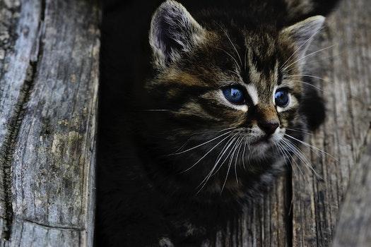 Free stock photo of animal, pet, kitten, cat
