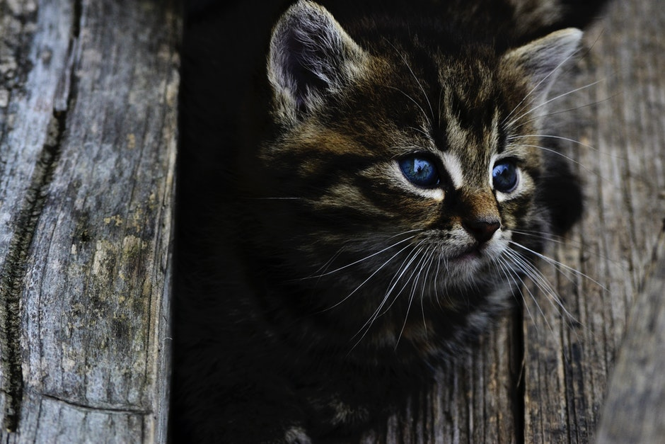 animal, animal photography, cat