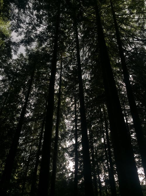 Free stock photo of adventure, forrest, trees, woods