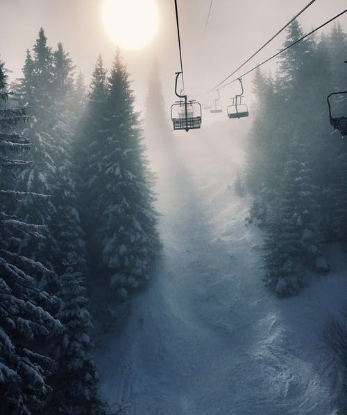 Gratis stockfoto met bomen, bossen, kou, mist