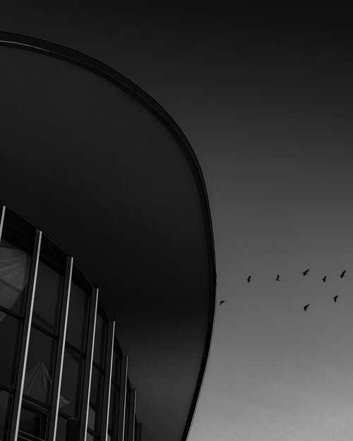 Low-angle Photography of Birds over Building