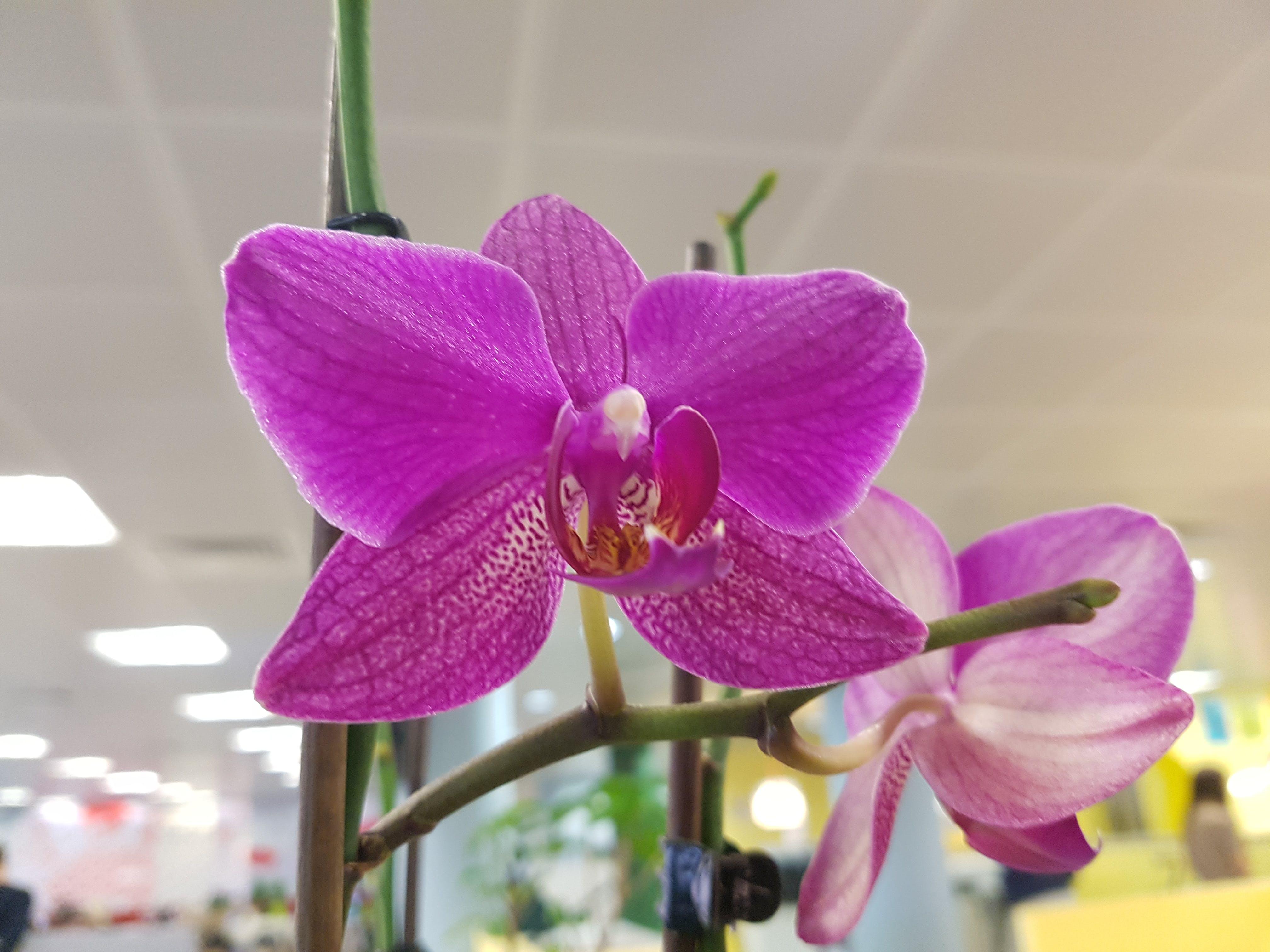 Free stock photo of office plants urban art flowers