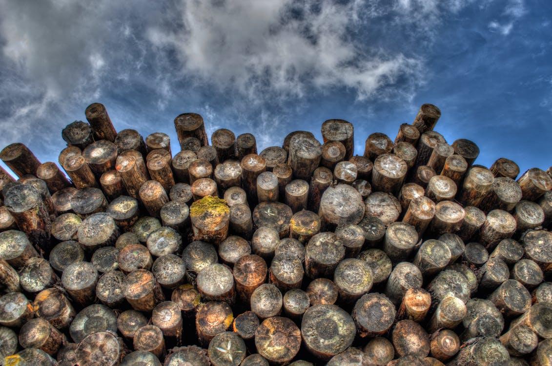 dřevo, kmeny stromů, lesnictví