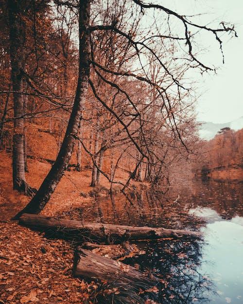 シーズン, パーク, 川, 木の無料の写真素材