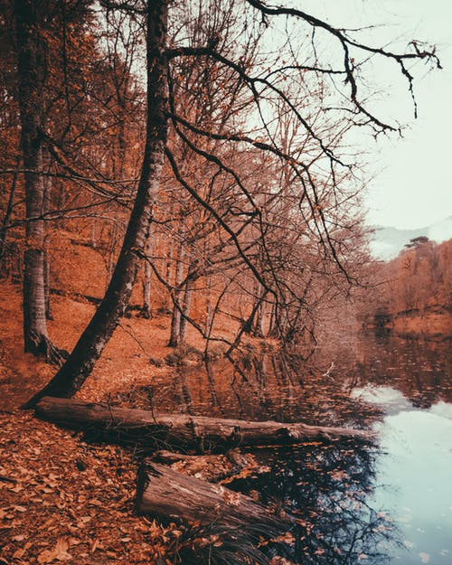 Gratis arkivbilde med årstid, elv, falle, falle
