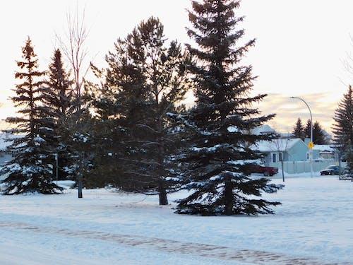 Gratis stockfoto met winterlandschap