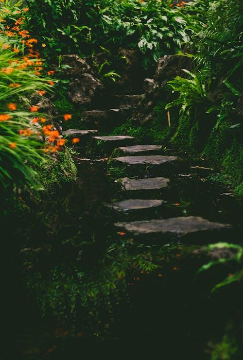 Безкоштовне стокове фото на тему «відбиття вогнів, дика квітка, зелене листя, зелений»