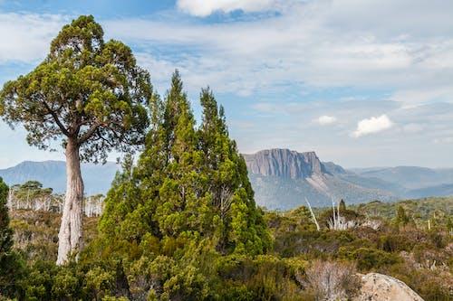 Free stock photo of Overland Track, tasmania
