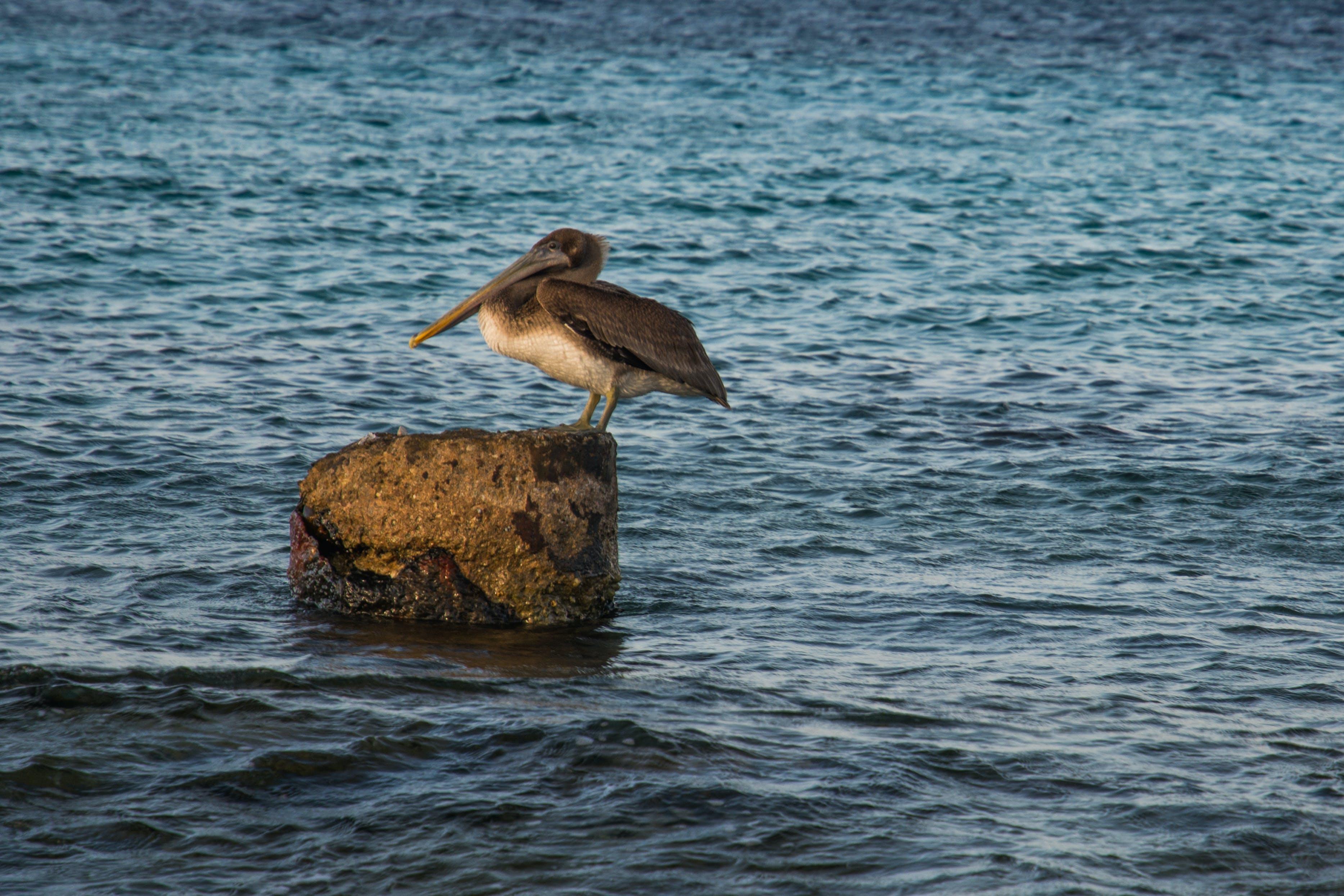 Gray Bird on Top of Rock