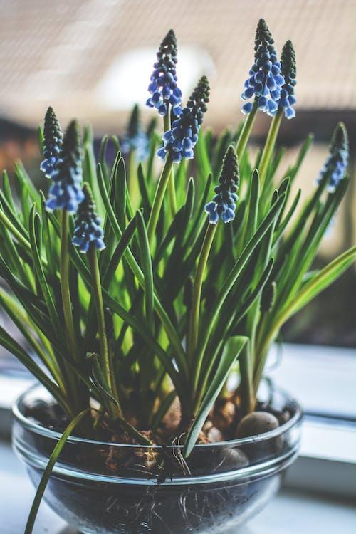 Imagine de stoc gratuită din botanic, botanică, culoare, floare