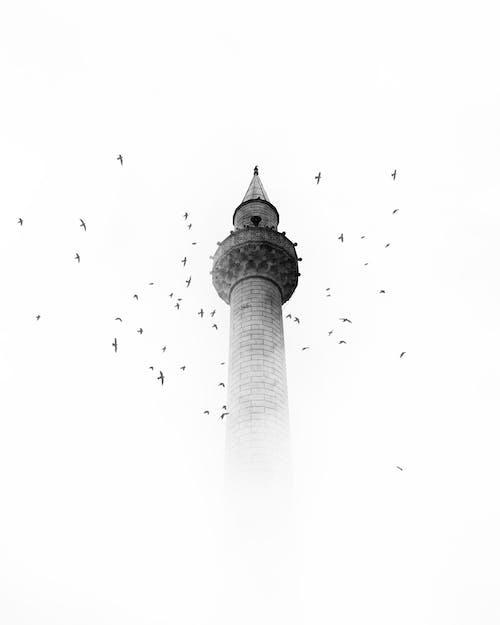 #mobilechallenge, 一座清真寺, 天性, 尖塔 的 免費圖庫相片