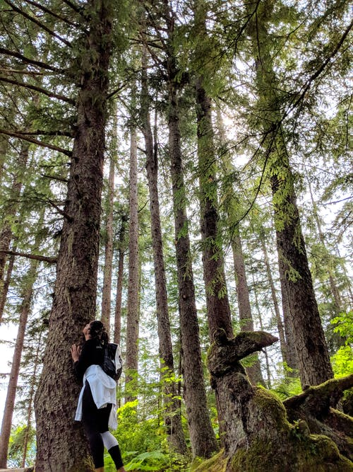Free stock photo of alaska, black woman, black women, dense forest
