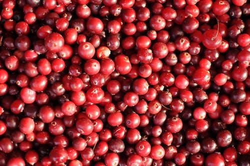 Imagine de stoc gratuită din fructe de padure, măceșe, mâncare, piață