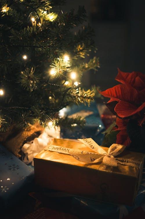 Fotobanka sbezplatnými fotkami na tému dar, darčeková krabička, farebné svetlá, osvetlený