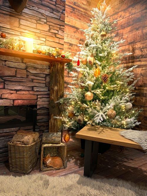 Imagine de stoc gratuită din acasă, arbore, cameră, confortabil