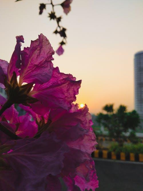 #mobilechallenge, インド, ケララ, 光の無料の写真素材