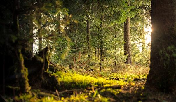 Free stock photo of light, landscape, nature, sun
