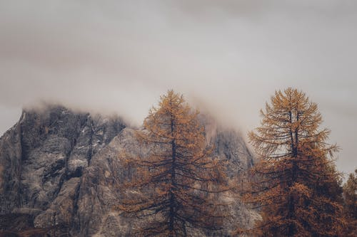 Photo of Trees and Rock Formation Under Foggy Weather