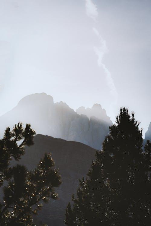 Ilmainen kuvapankkikuva tunnisteilla luonto, maisema, puut, sumu