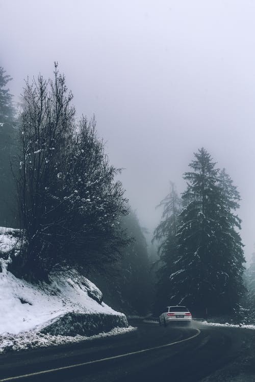 White Car on Roadway Beside Trees