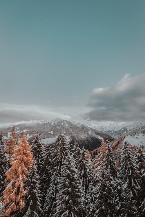 大雪覆盖的树木
