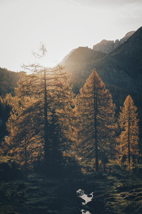 Бесплатное стоковое фото с HD-обои, горы, деревья, дневной свет