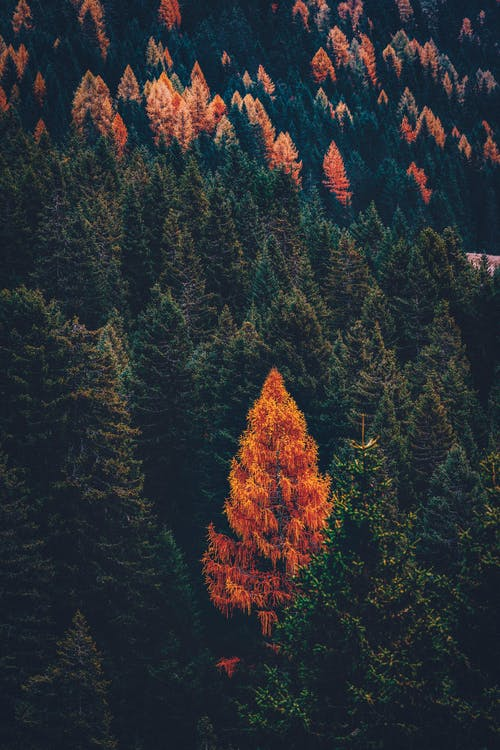 Green and Brown Trees on Mountain